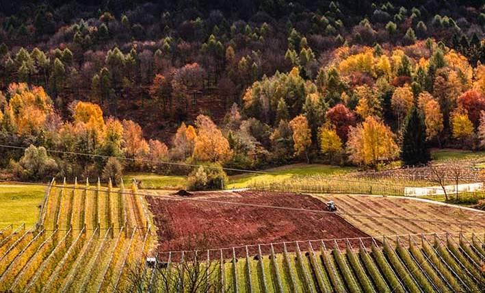 Affitto agrario: durata e recesso