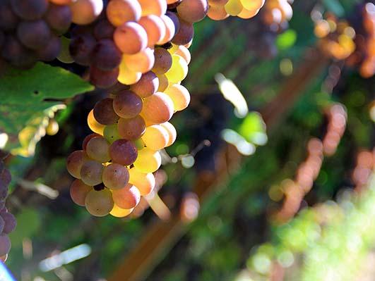 Estratto della polizza infortuni raccoglitori di frutta