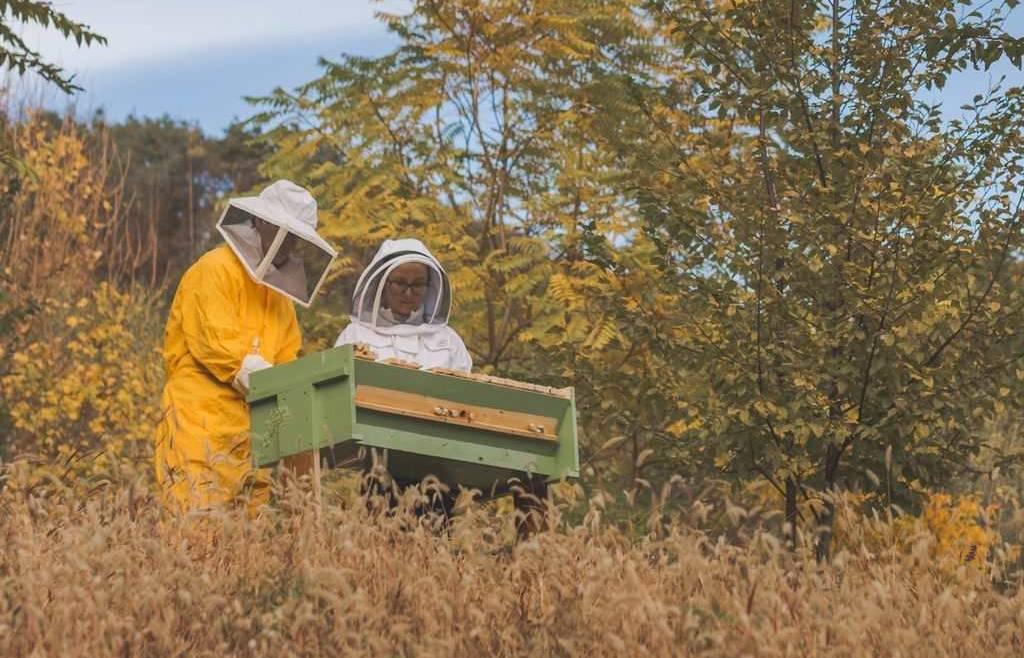 Scadenza censimento apicoltura 2018