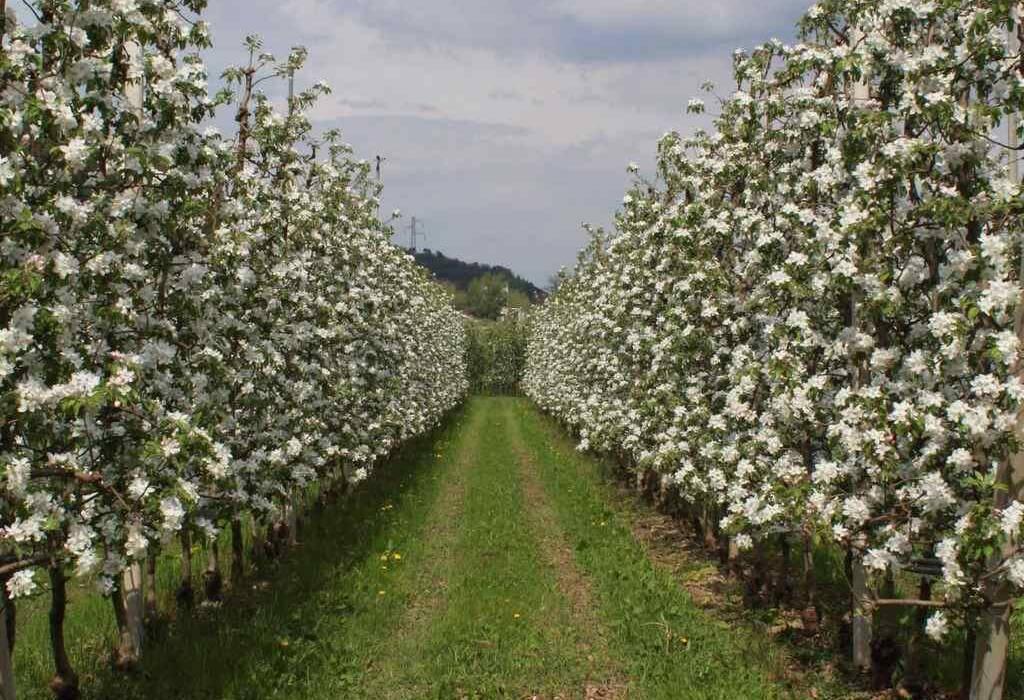 cia-trentino - meleto in fiore