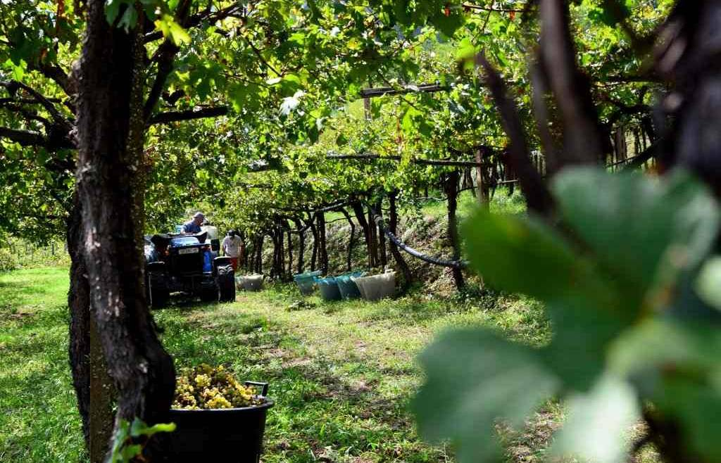 Richiesta nuove autorizzazioni per impianti viticoli 2019