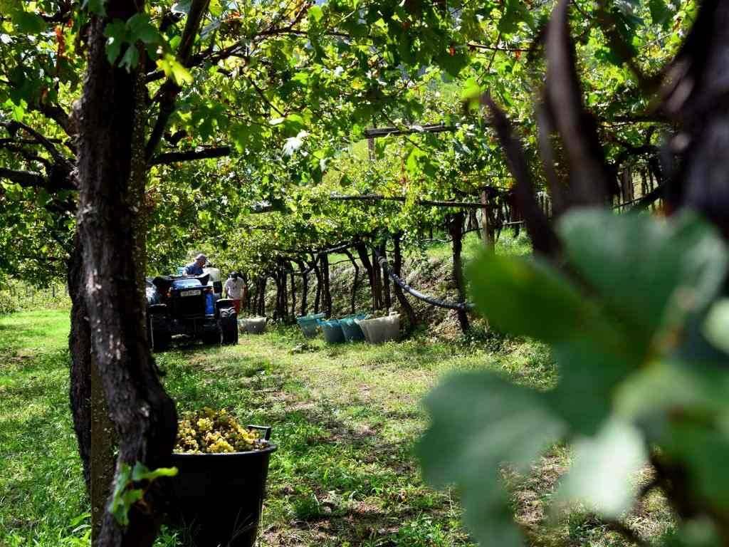 Chiuso | Richiesta autorizzazioni impianti viticoli 2018