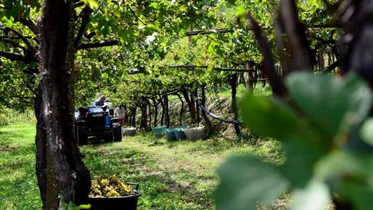 Chiuso   Richiesta autorizzazioni impianti viticoli 2018
