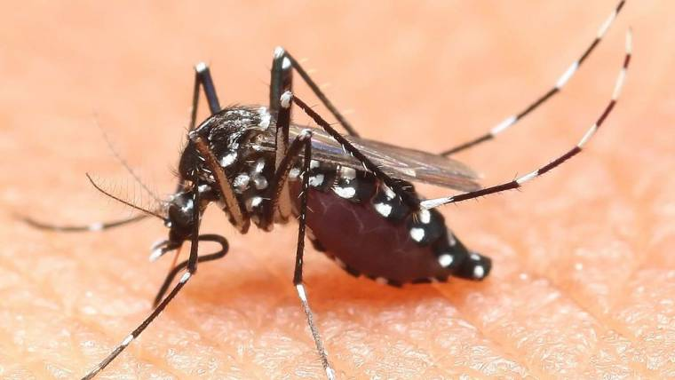 Comune di Pergine: provvedimenti per la prevenzione e il controllo della zanzara tigre