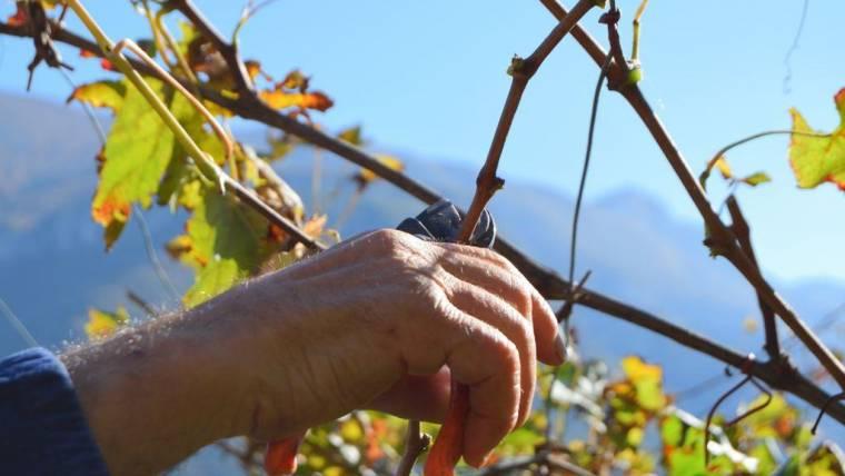EBTA a supporto dei lavoratori agricoli trentini