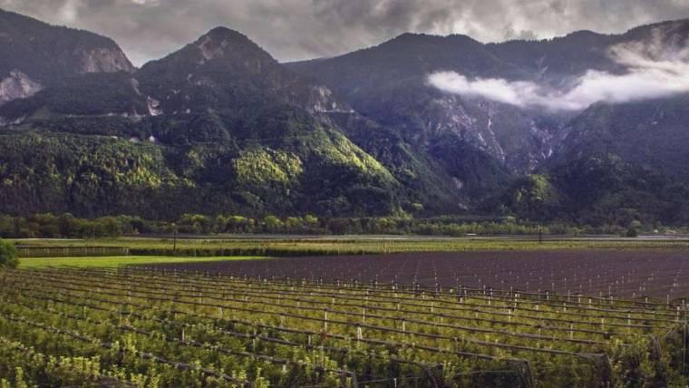 Bando PSR mis 4.1.1 sostegno a investimenti nella aziende agricole