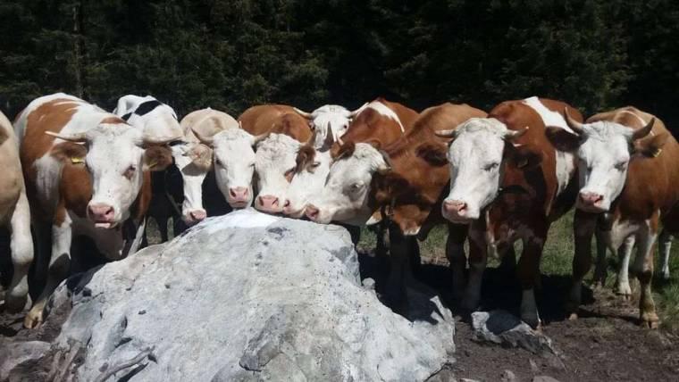 Contributi per l'adeguamento di strutture per la macellazione