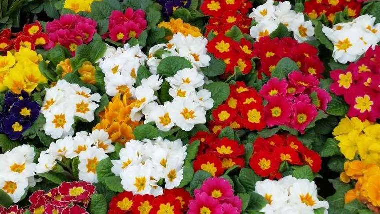 Proroga scadenza | Aperto il bando per le agevolazioni per la floricoltura
