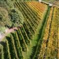Aperto il bando per le agevolazioni per la conservazione e la sistemazione del paesaggio rurale