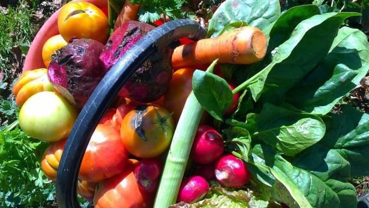 Controlli aziende agricole