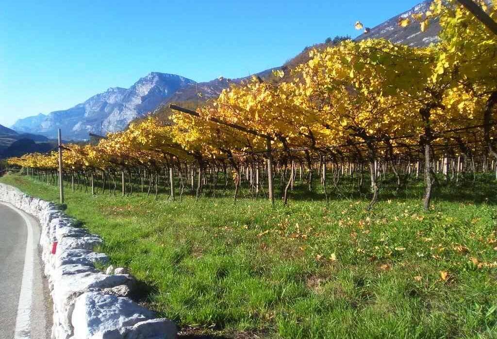 cia-trentino - vigne gialle prospettiva