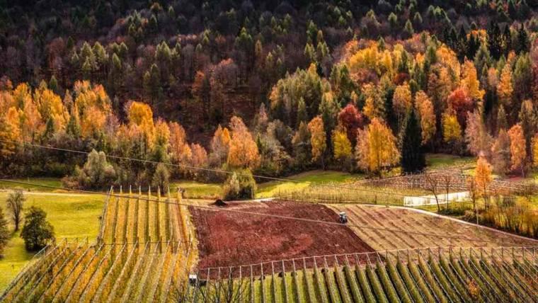 Brevetto Professionale per Imprenditori Agricoli   adesioni entro il 15/10