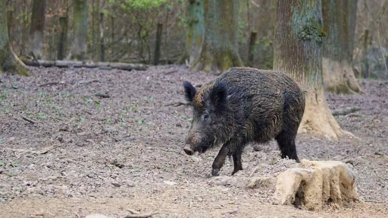 Domande di contributo danni da fauna selvatica