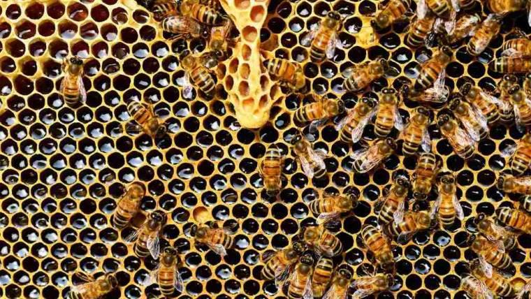 Censimento apicoltura 2019