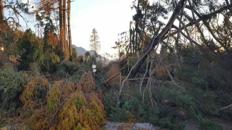 Piano Mirato di Prevenzione sui rischi del settore forestale: incontri sul territorio