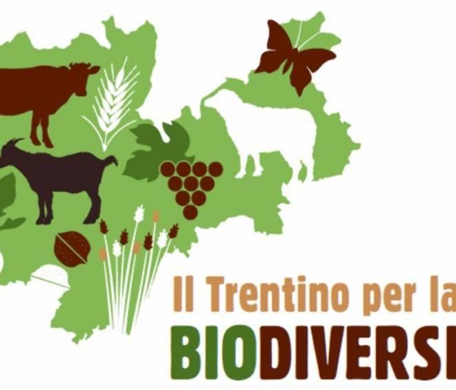 """""""Le giornate della Biodiversità 2019"""" – Mercato di produttori agricoli sabato 18 maggio"""