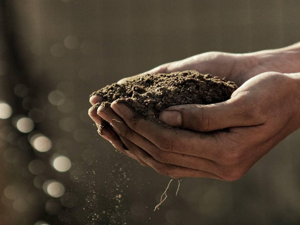 Contributi ISMEA imprenditorialità giovanile in agricoltura