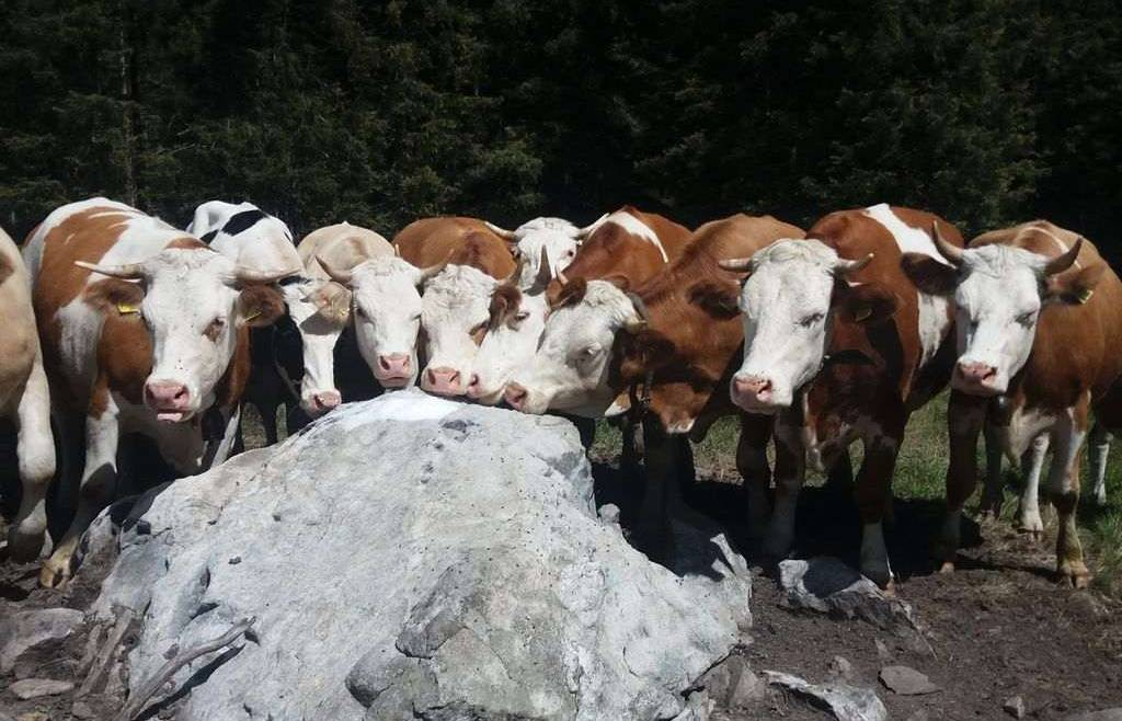 Contributi per impianti per la produzione di Biogas
