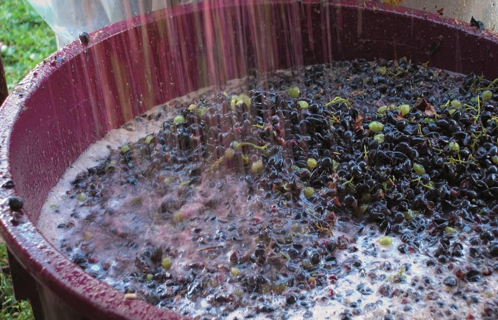 Dichiarazione di giacenza vino e mosti