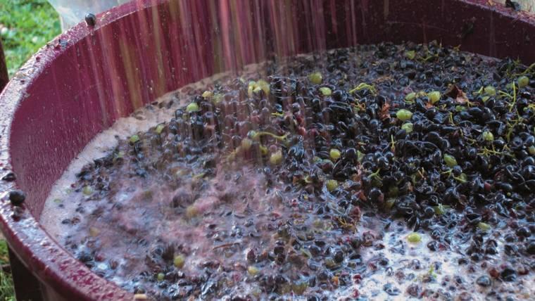 Dichiarazioni di vendemmia e di produzione di vino