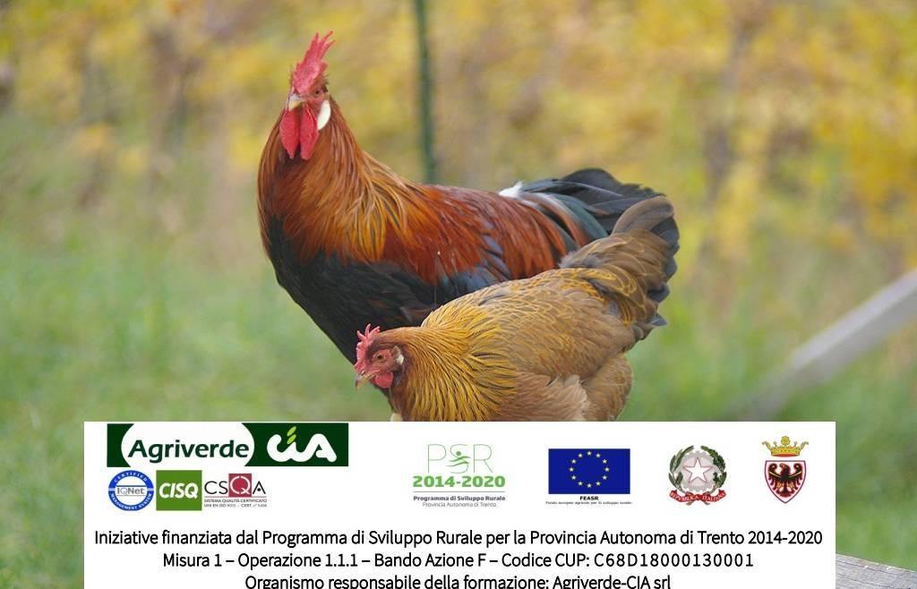 corsi Avicoltura biologica di montagna | iscrizioni entro 20/10