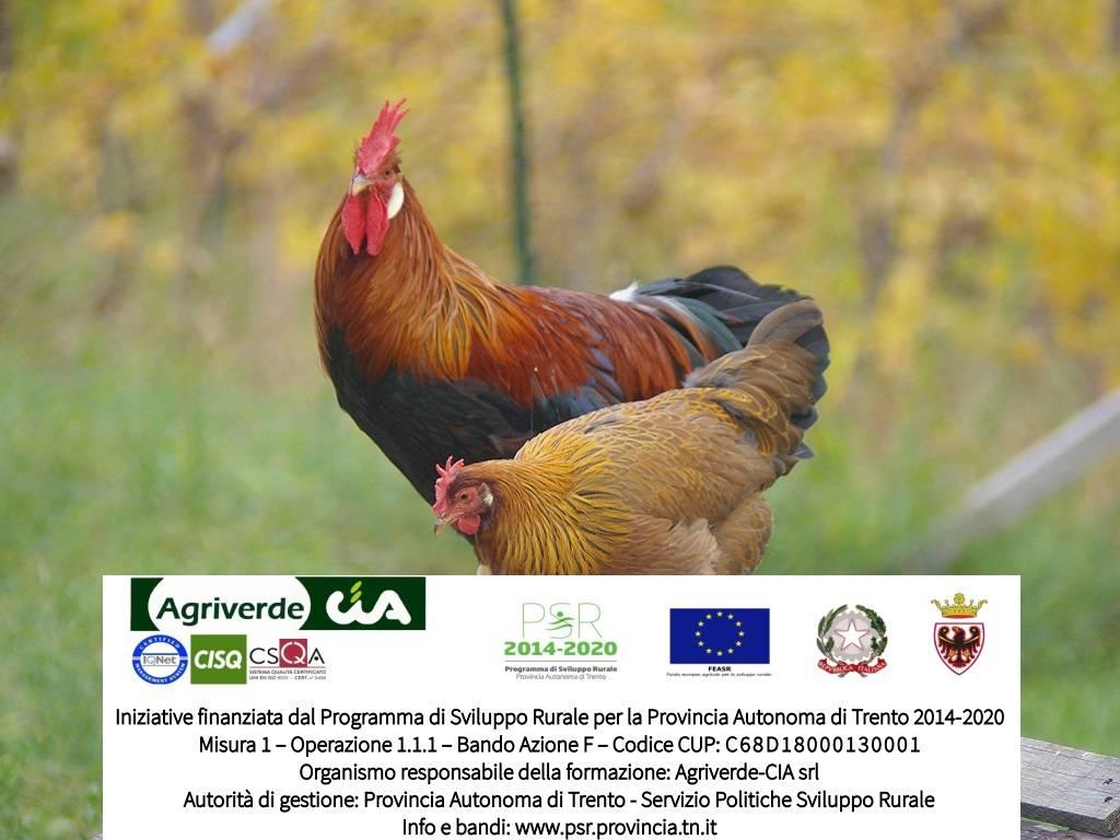 corso Avicoltura biologica di montagna | iscrizioni entro 28/02