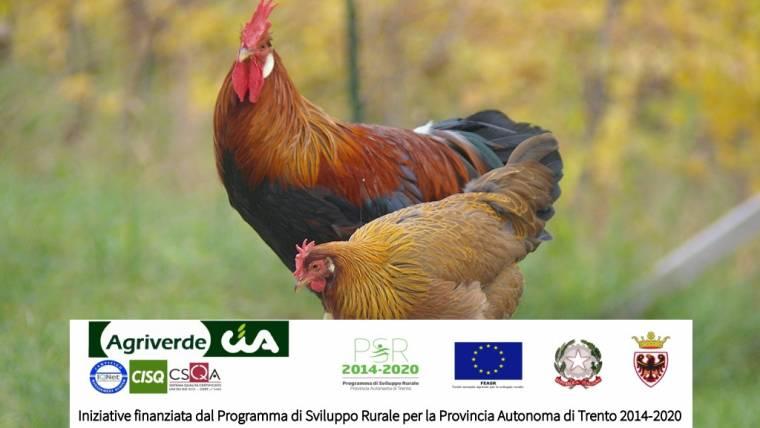 corso Avicoltura biologica di montagna a Tione
