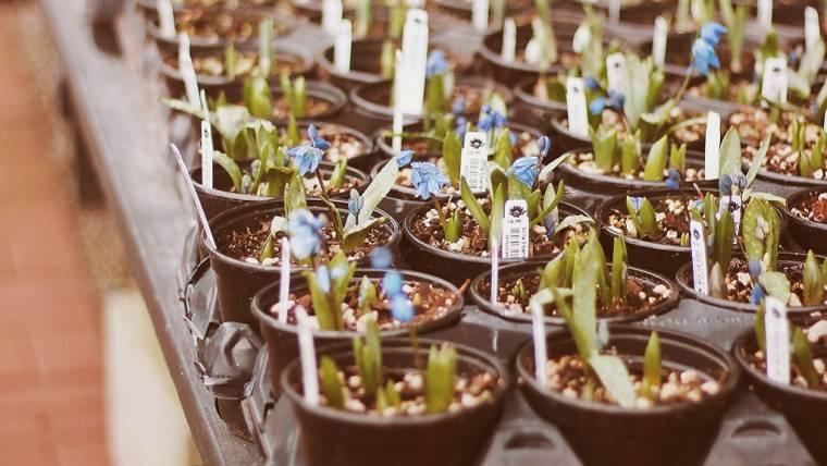 Il nuovo regolamento fitosanitario