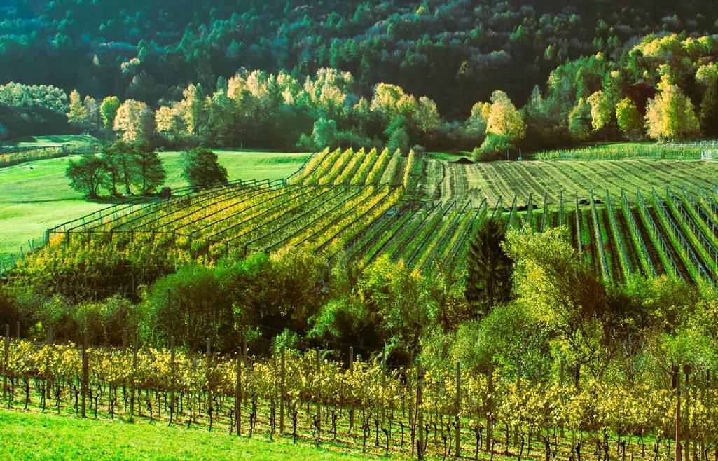 Lettera del Presidente Cia – Agricoltori Italiani