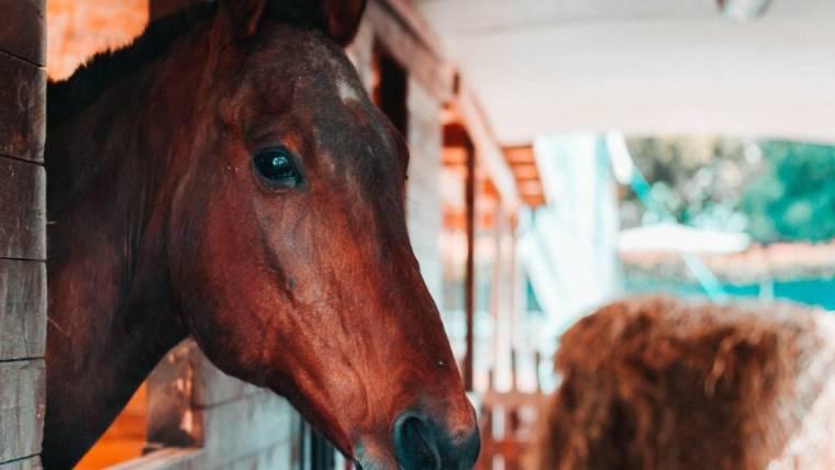 Corso Assistente Turismo Equestre