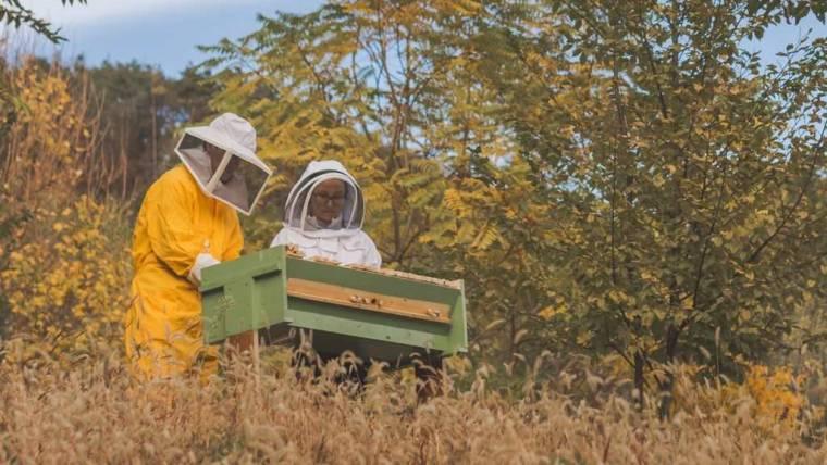 Scadenza censimento apicoltura 2020