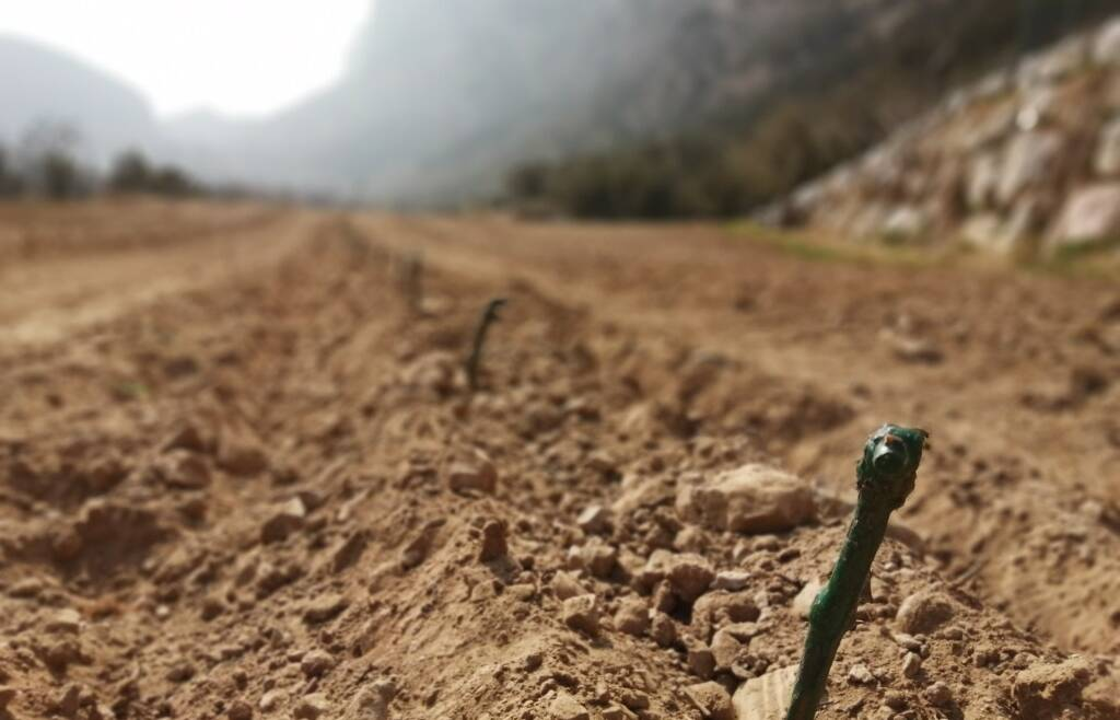 Richiesta nuove autorizzazioni per impianti viticoli 2021