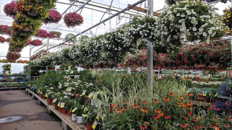 Domande di contributo per il settore della floricoltura
