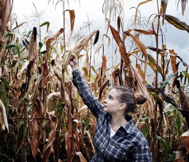 """Novità sul bando ISMEA: """"Più Impresa – Imprenditoria giovanile e femminile in agricoltura"""""""